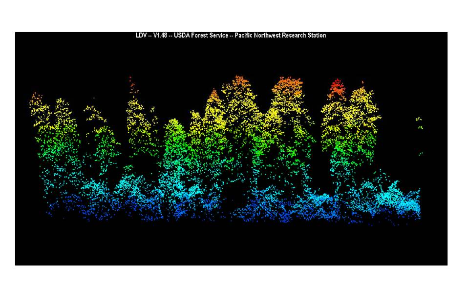 LIDAR of H.J. Andrews Forest | This image of a Douglas-fir ...