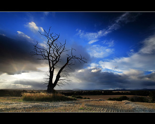 Dead Tree & God Beams - Strathmore | by angus clyne