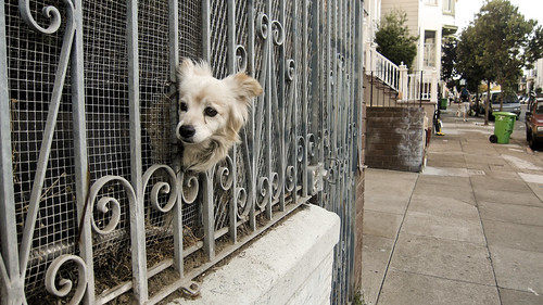 Dog Fence | by eviloars