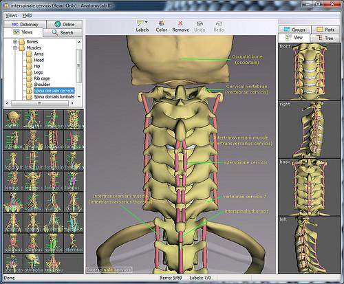 Anatomy Software Flickr
