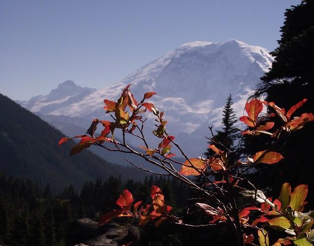 Mt Rainier and Summit Lake Trail color 10 1 10