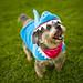 Shark Chiquita!