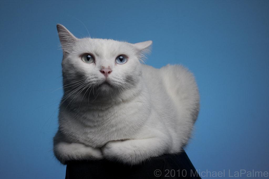 Cat E M White