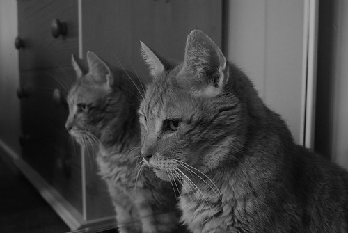 Cats & Mirrors | by wrchuter