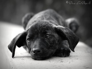 Shelter dog | by Lizduquesa