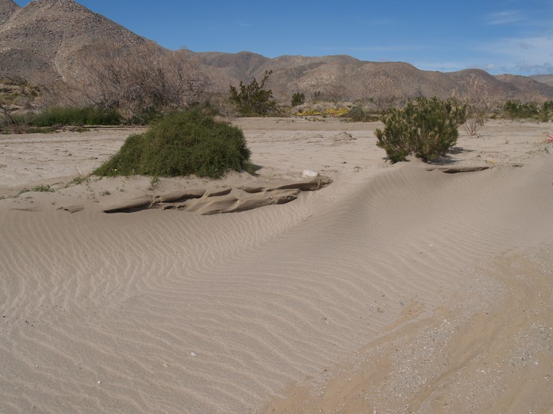 Wind-blown sand in Coyote Creek's dry wash on the eastern side of Collins Valley