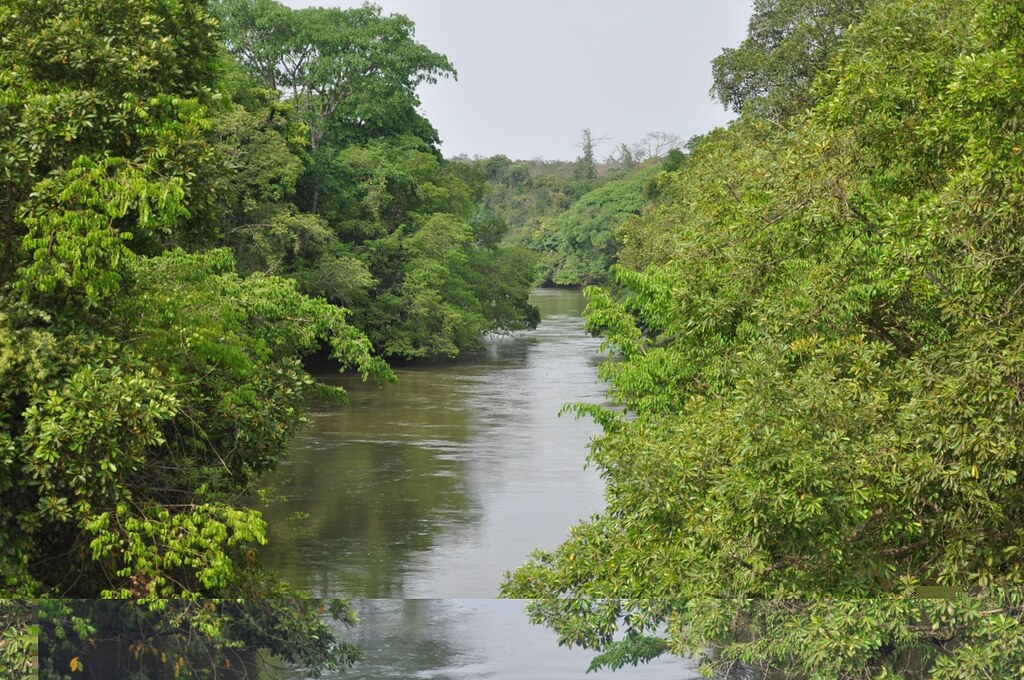 Jungle river one of many large rivers we crossed this for Jungle furniture white river