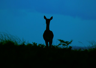 Deer silhouette | by PAJ Photography