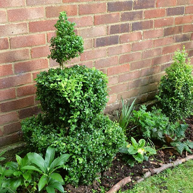 May garden border