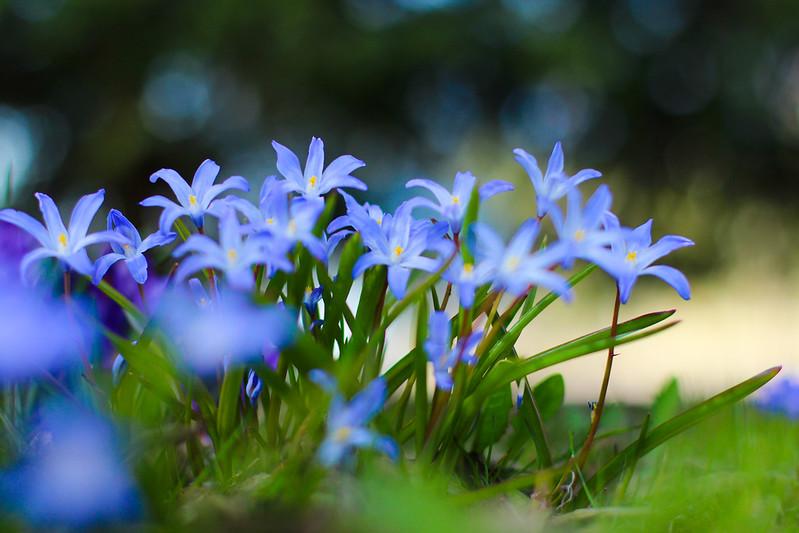kukkia 7