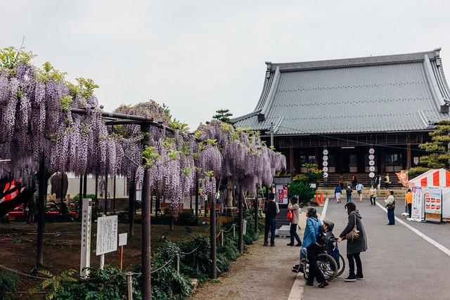 Fuji_201705_51