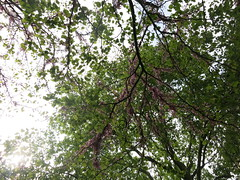 canopy with petals