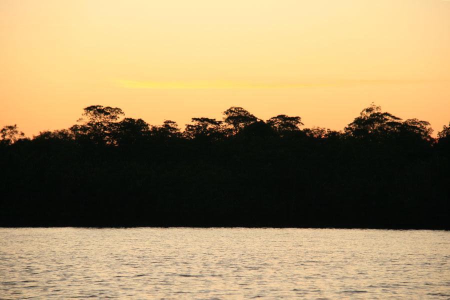 Kuching_mangrovemaisema