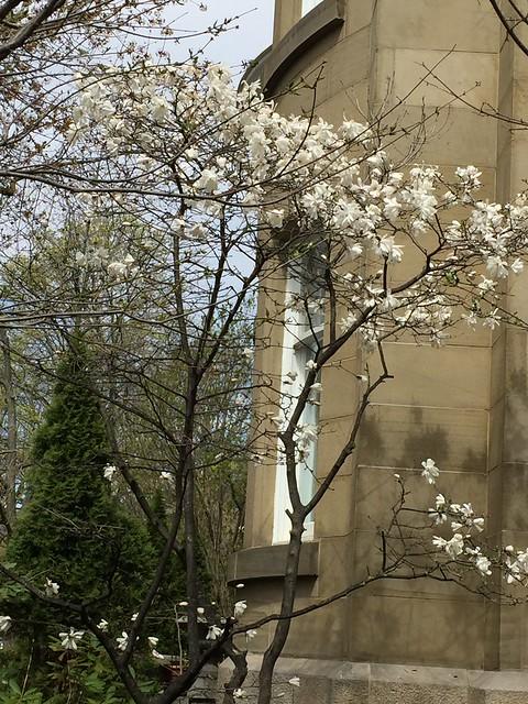 Magnolias Beginning