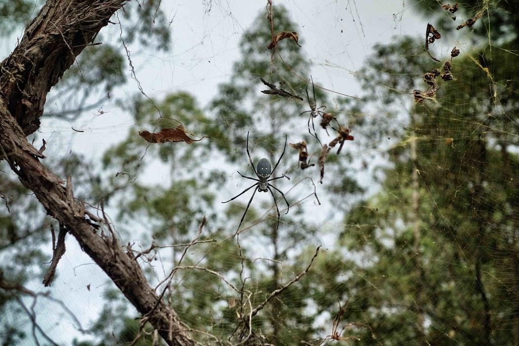 Bali - Ubud - Mont Batur - Spider