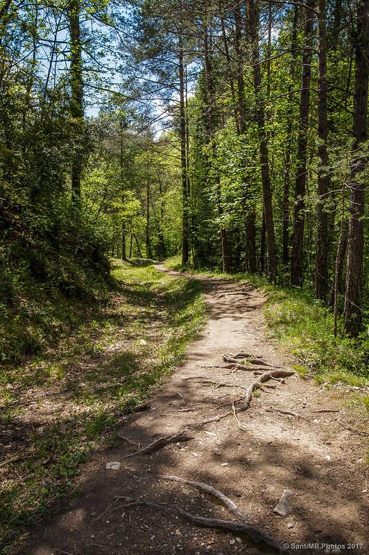 Camino cerca de la riera de Mergançol
