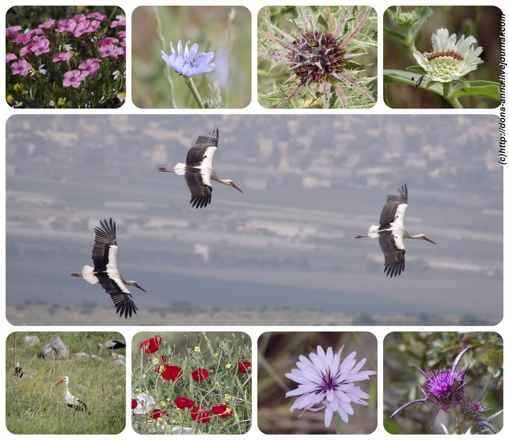 Gilboa-Collage-a