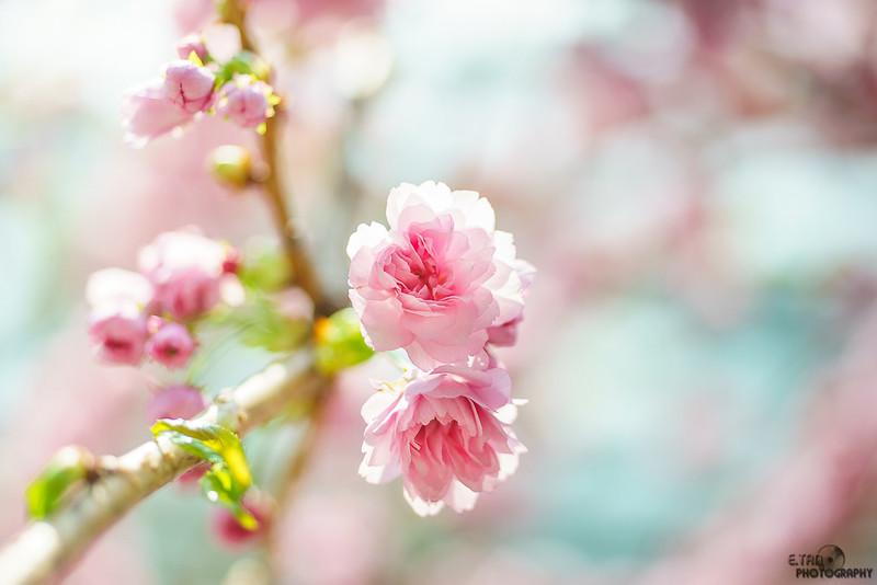 Blossom Bliss - 017