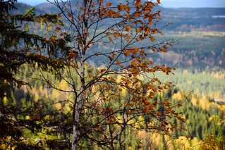 Koli in the Autumn VI | by Janacekian