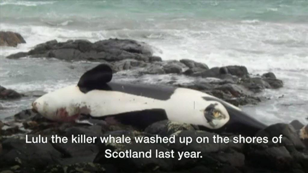 圖片來源:BBC影片截圖。