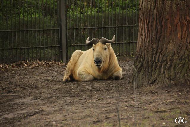 Besuch Tierpark Friedrichsfelde 17.04.1740