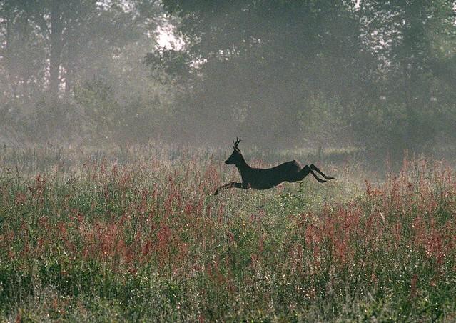 Usklajevanje odnosa gozda in jelenjadi
