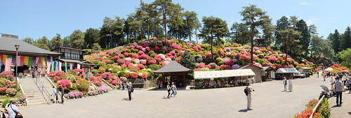 Shiofune Kannon temple Azalea Festival 2017 17