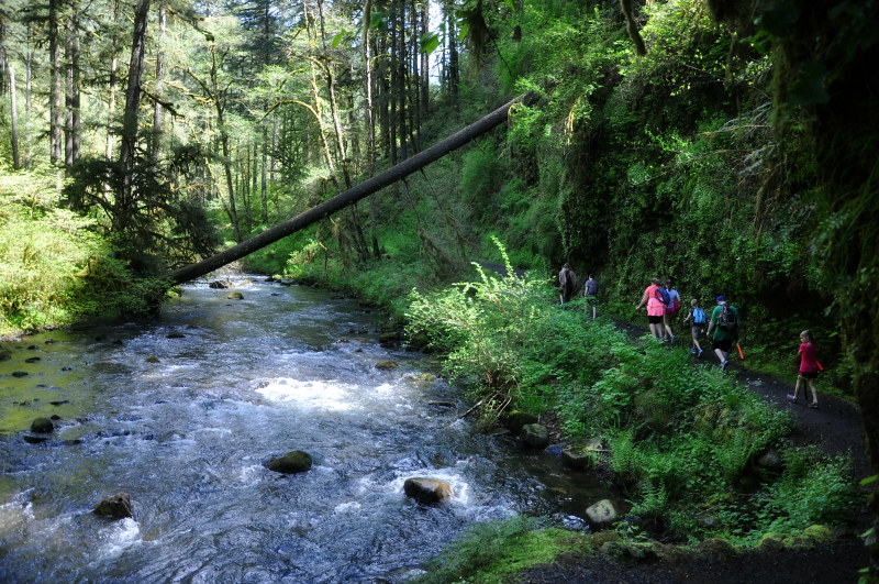 Hiking Silver Creek @ Mt. Hope Chronicles