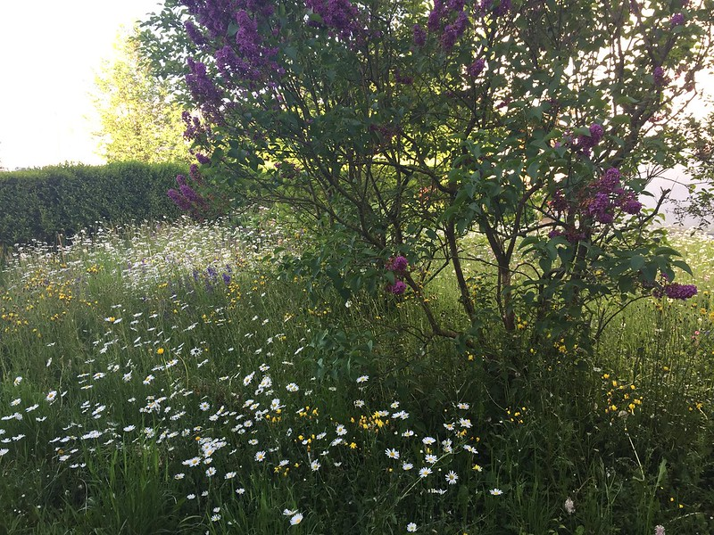 Wild Meadow and Lilac