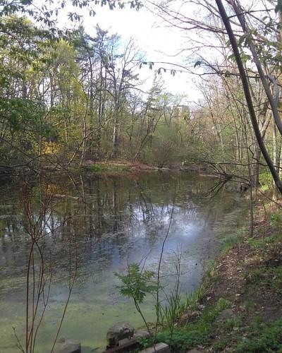 Taddle Creek Pond #toronto #wychwoodpark #latergram #taddlecreek #pond