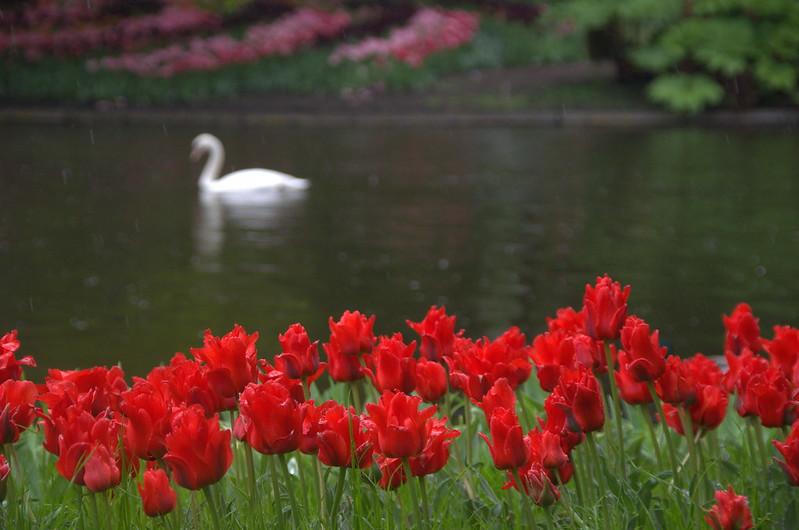 Lisse, Holanda