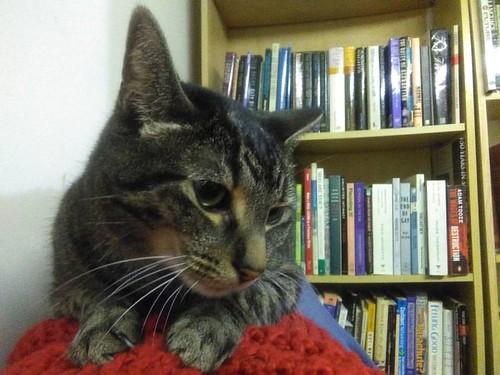Shakespeare, in front of a bookshelf #toronto #Shakespeare #catsofinstagram #caturday