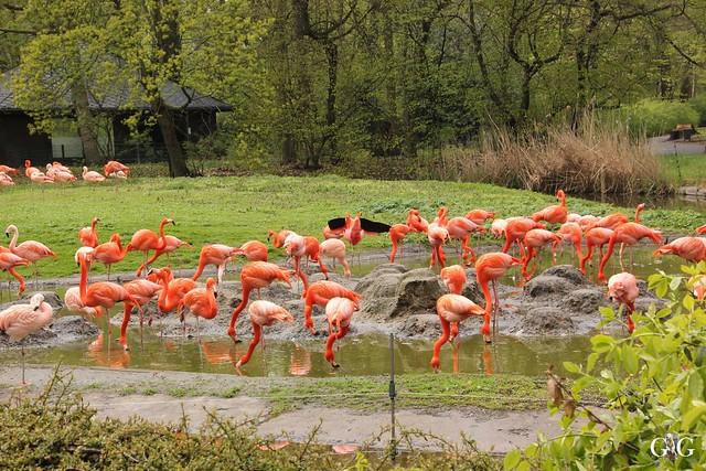 Besuch Tierpark Friedrichsfelde 17.04.1728