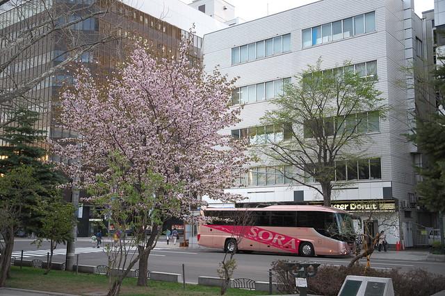 20170503札幌市中央区付近の桜_09