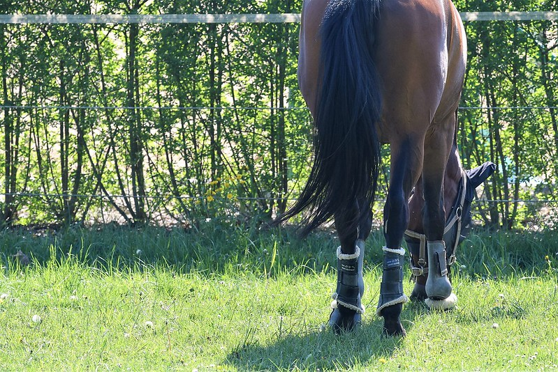 Horses 23.04 (2)