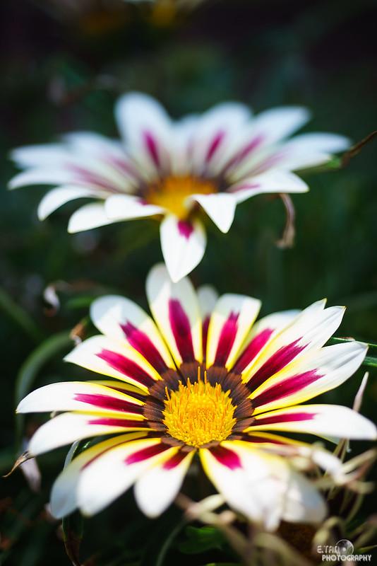 Blossom Bliss - 021
