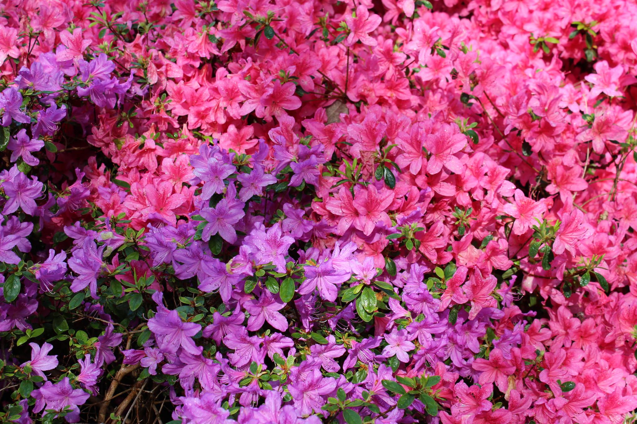 Exbury Gardens detail shots (5)