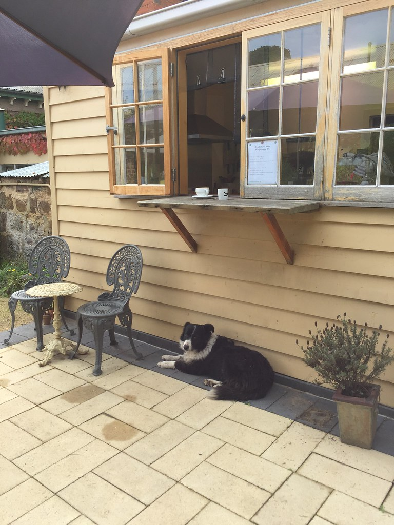 saffy the collie resting outside the tarndie cafe window