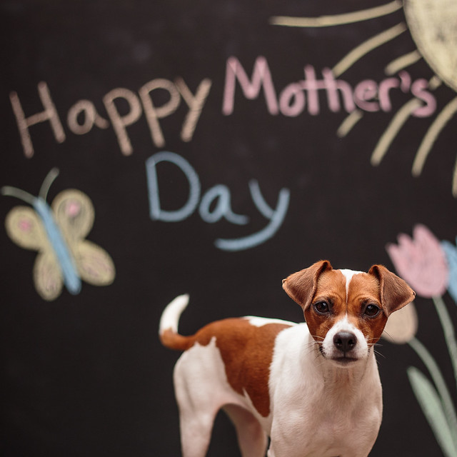 Mother's Day-5577