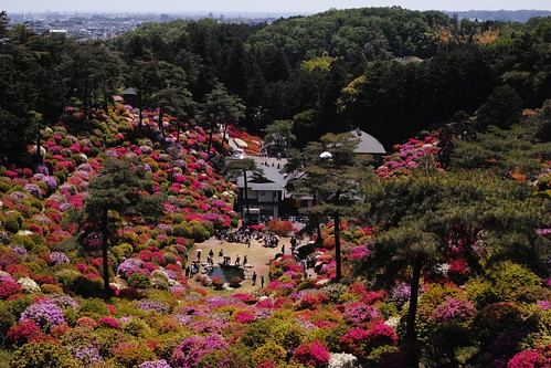 Shiofune Kannon temple Azalea Festival 2017 33