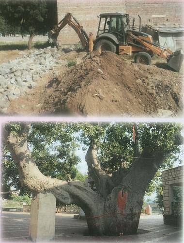 वृक्ष लगाओ धरती बचाओ