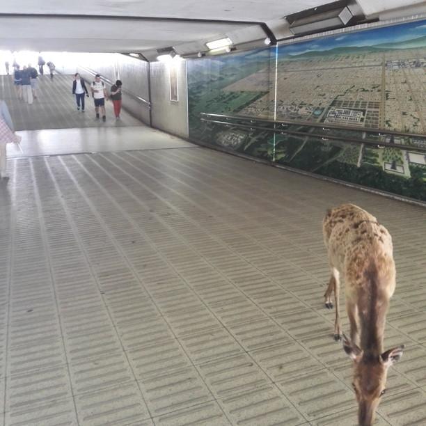 地下通路の鹿