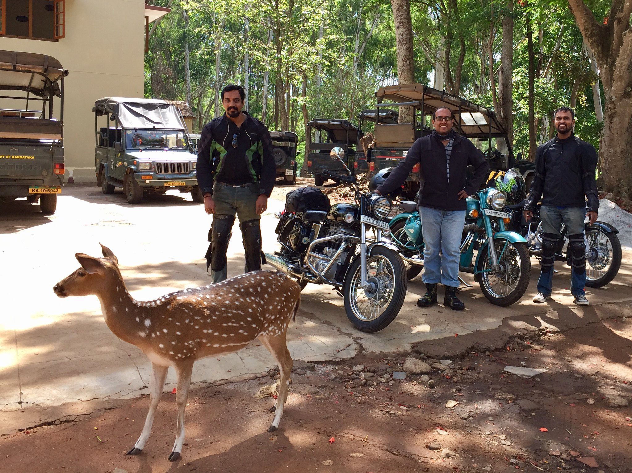 A spotted deer photobombs the mandatory pic