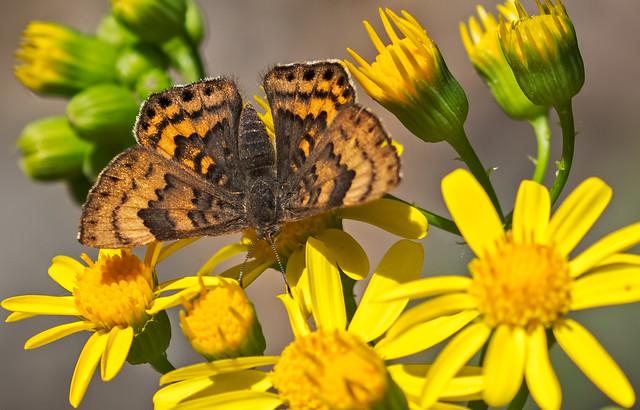 Butterfly-8-7D2-041217