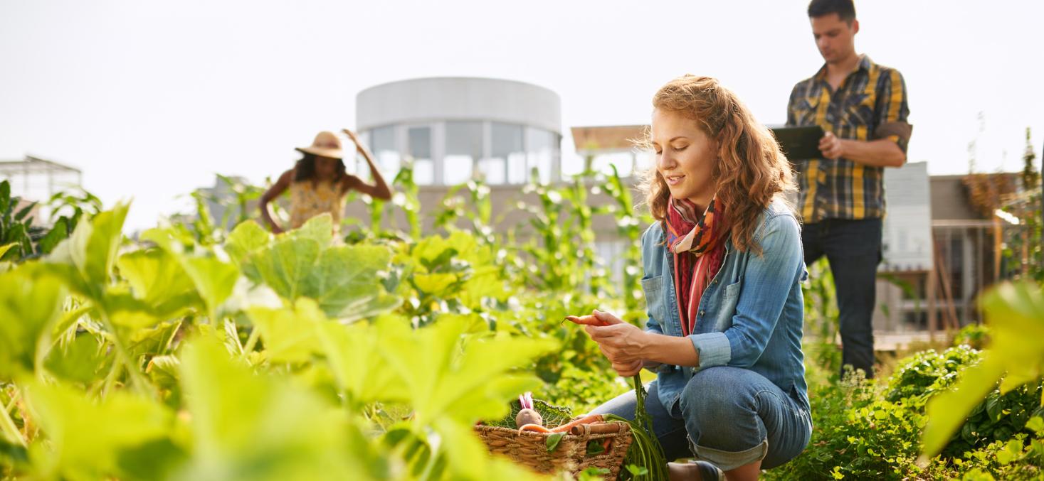 Corporate food garden