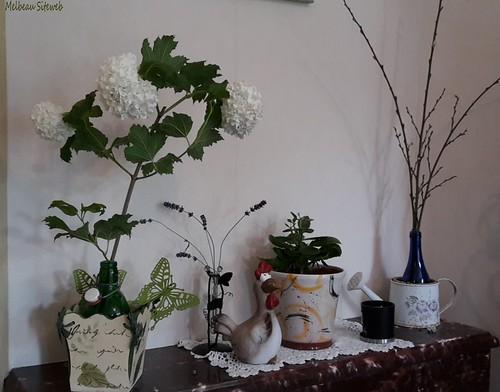 Arbuste à fleurs