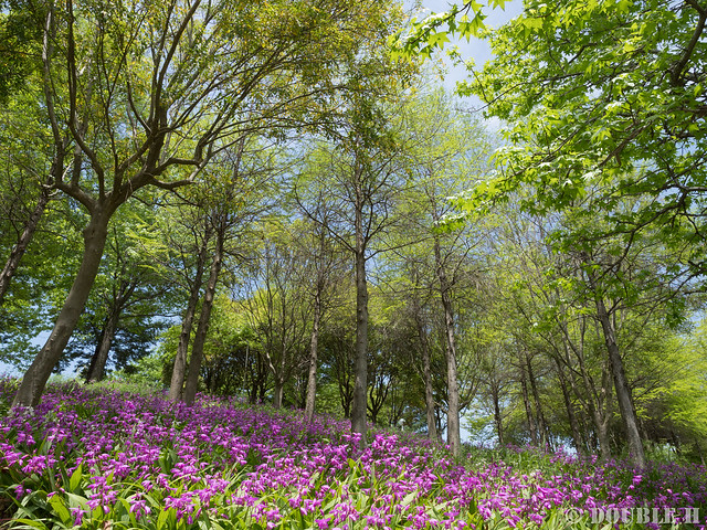 Akashi Kaikyo National Government Park (18)