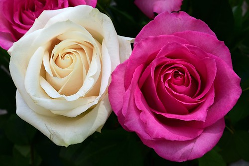 Mother's Day Roses | by slgckgc