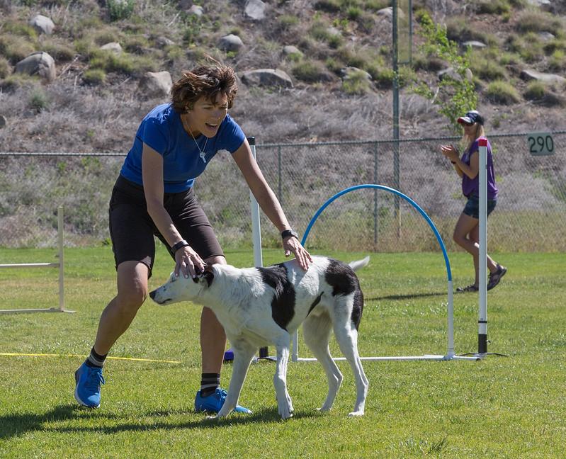dog_agility_20170506_151