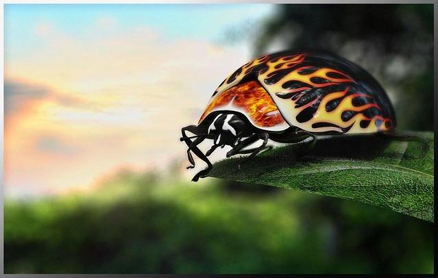 The crazy ladybug